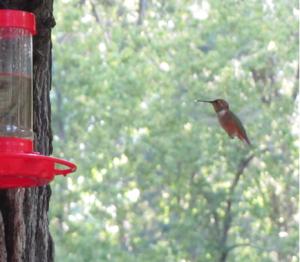 kolibriflügel
